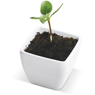 Mini-gradina cu seminte de floarea-soarelui